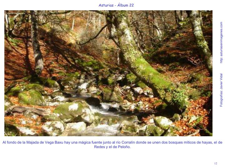 Al fondo de la Majada de Vega Baxu hay una mágica fuente junto al río Corralín donde se unen dos bosques míticos de hayas, el de Redes y el de Peloño.