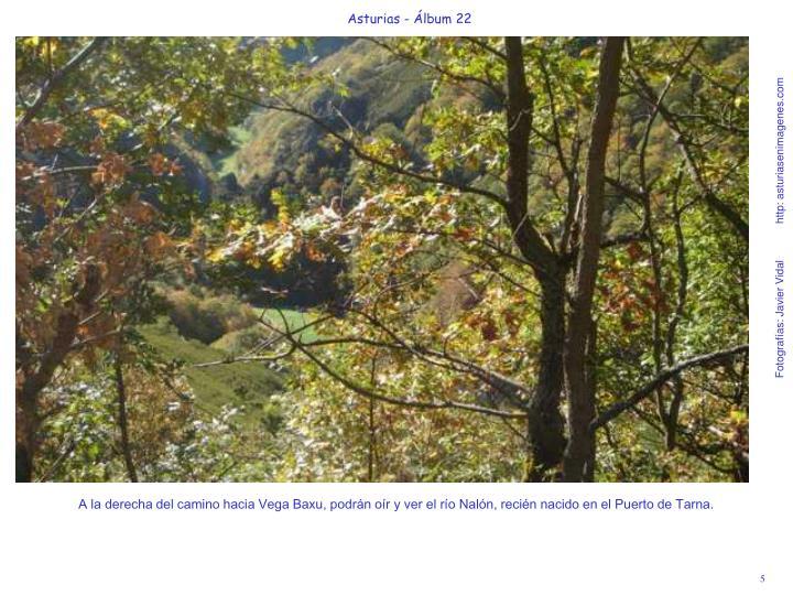 A la derecha del camino hacia Vega Baxu, podrán oír y ver el río Nalón, recién nacido en el Puerto de Tarna.