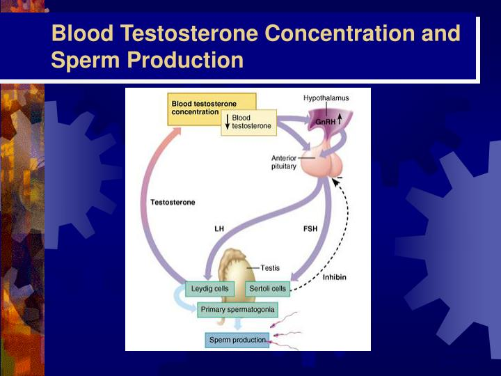 Blood Testosterone Concentration and Sperm Production