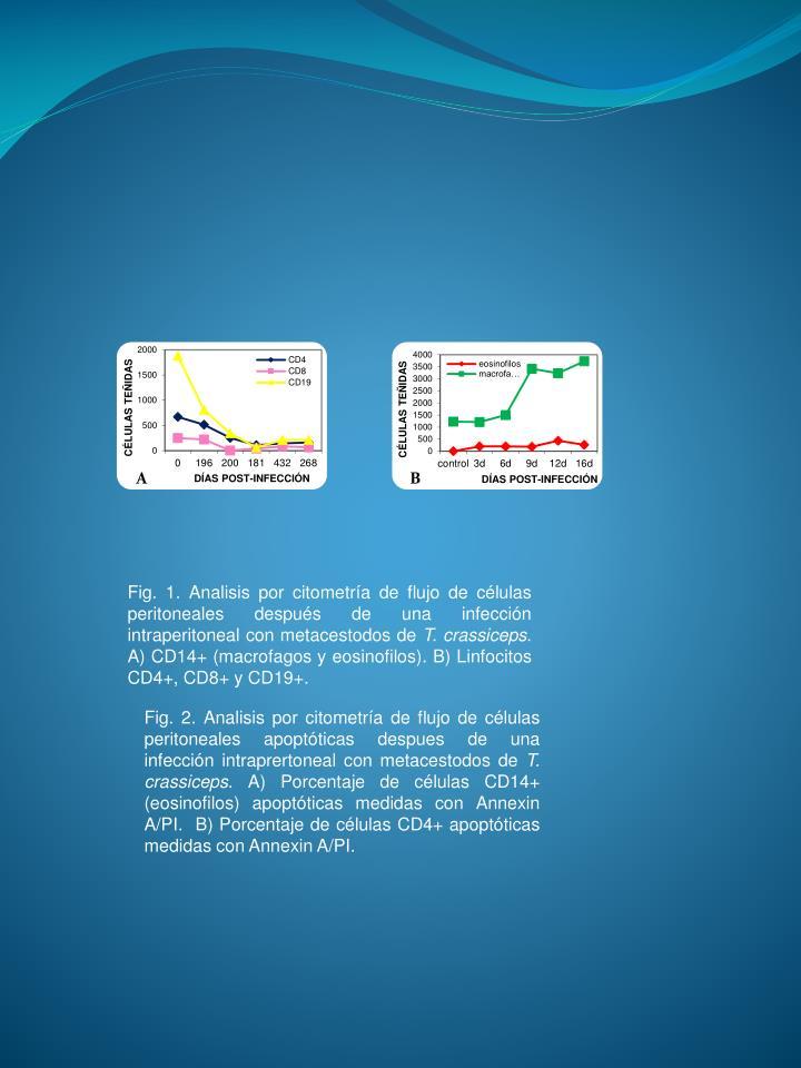 Fig. 1. Analisis por citometría de flujo de células peritoneales después de una infección intraperitoneal con metacestodos de
