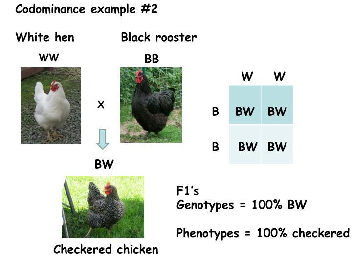 Codominance example #2