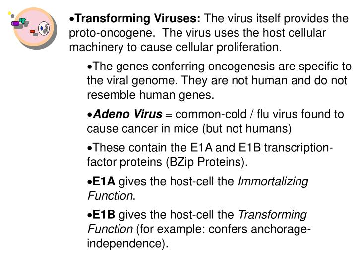 Transforming Viruses: