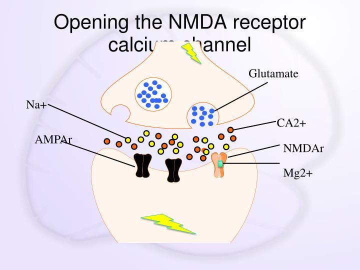 Opening the NMDA receptor calcium channel