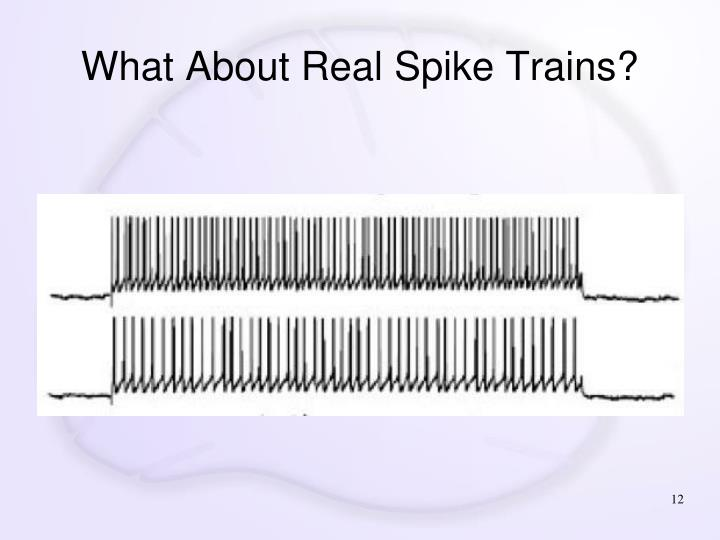 What About Real Spike Trains?
