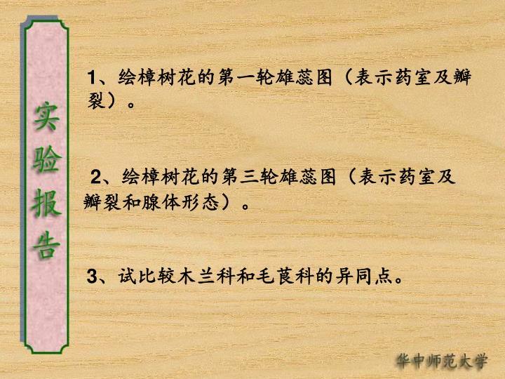 1、绘樟树花的第一轮雄蕊图(表示药室及瓣裂)