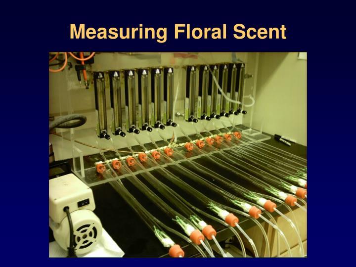 Measuring Floral Scent