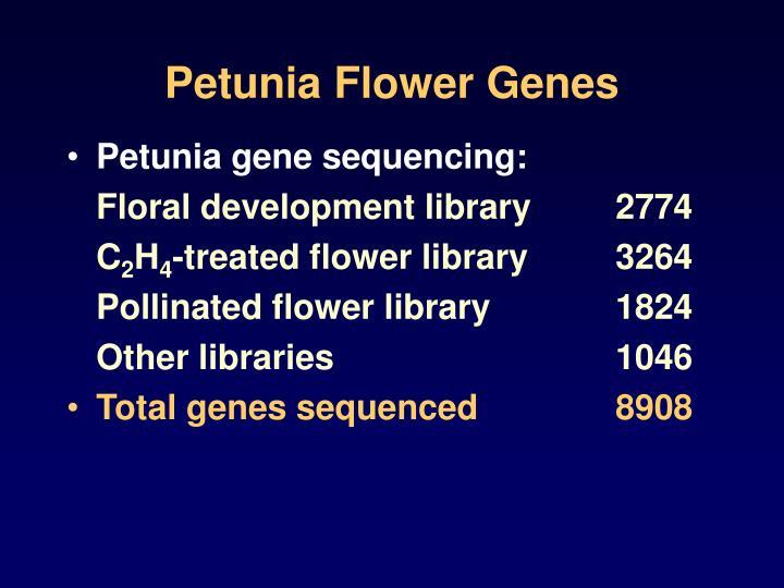 Petunia Flower Genes