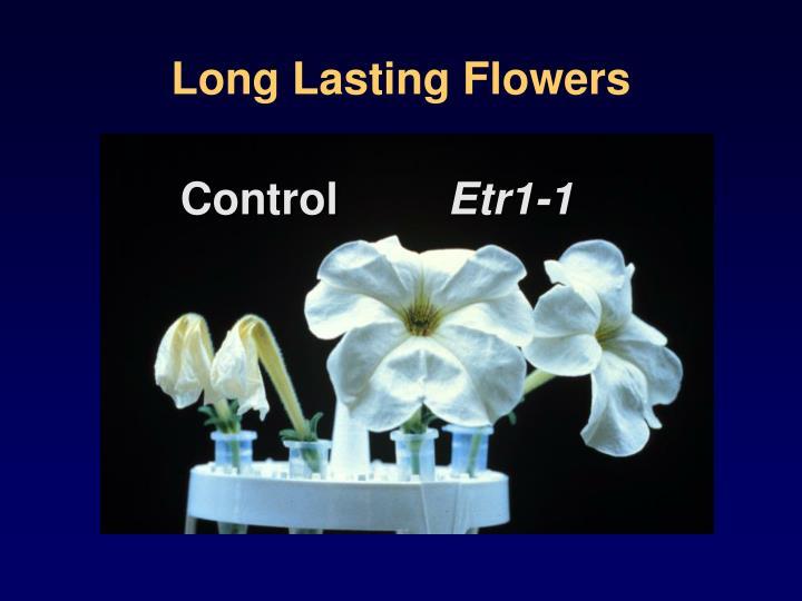 Long Lasting Flowers