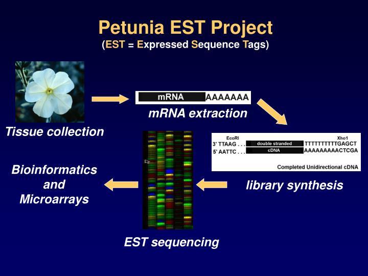 Petunia EST Project