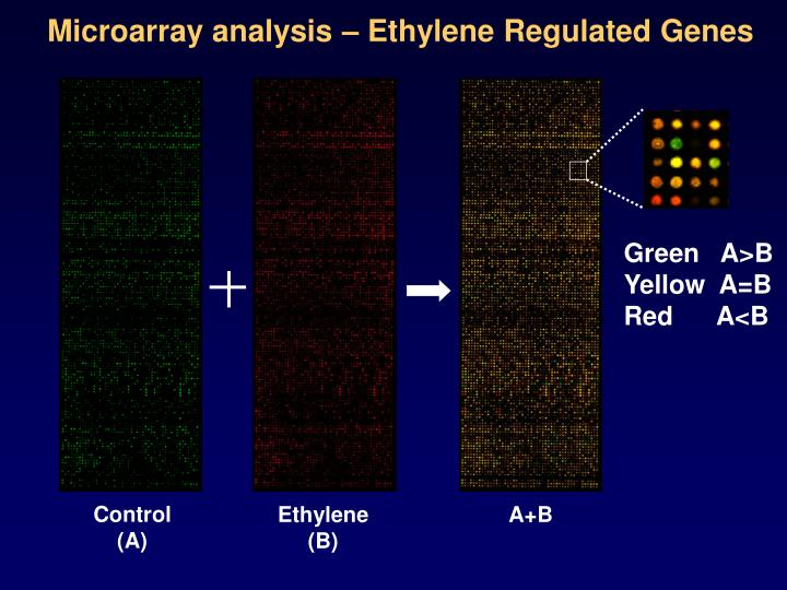 Microarray analysis – Ethylene Regulated Genes
