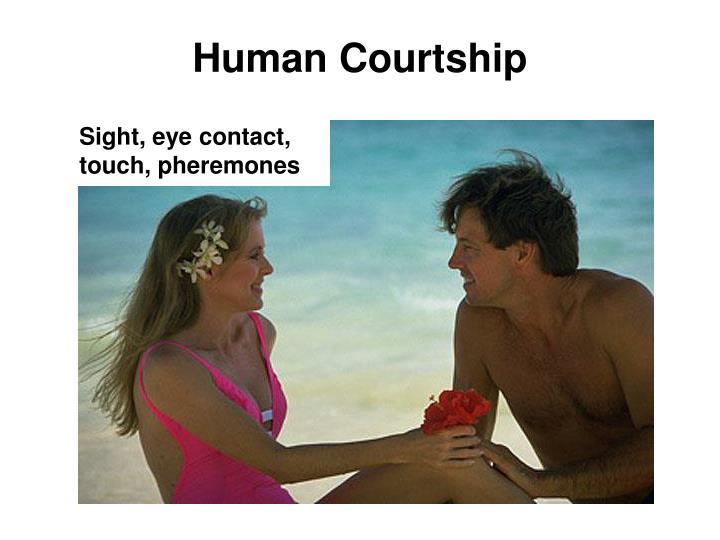 Human Courtship