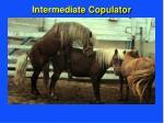 intermediate copulator