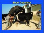 short copulator