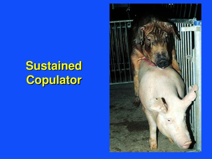 Sustained Copulator