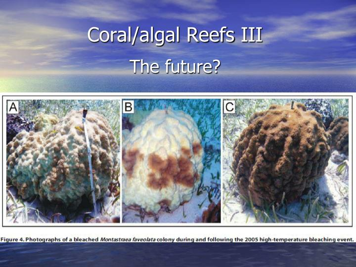 Coral algal reefs iii