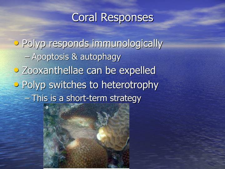 Coral Responses