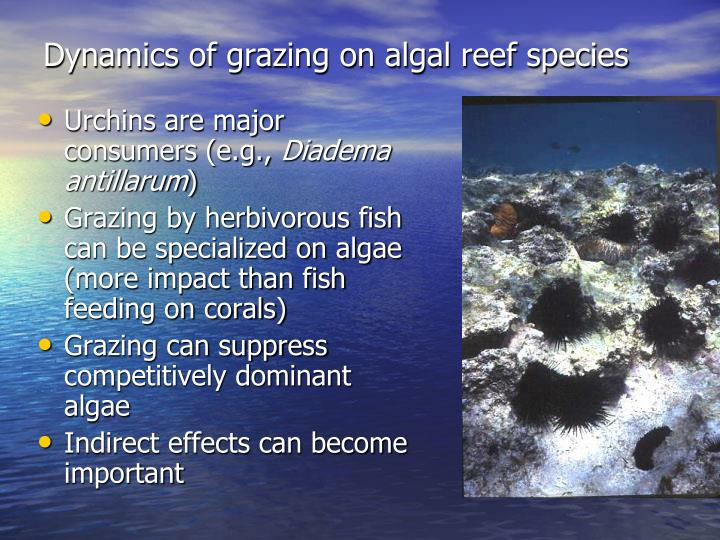 Dynamics of grazing on algal reef species