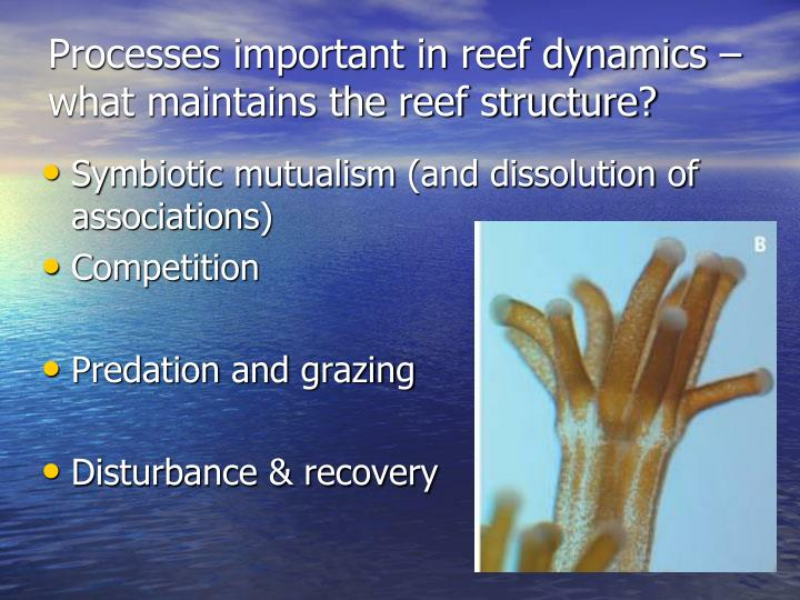 Processes important in reef dynamics – what maintains the reef structure?