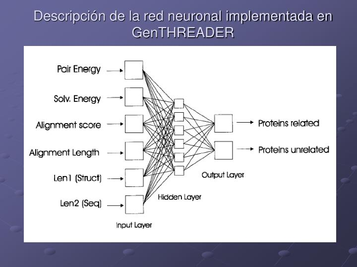 Descripción de la red neuronal implementada en GenTHREADER