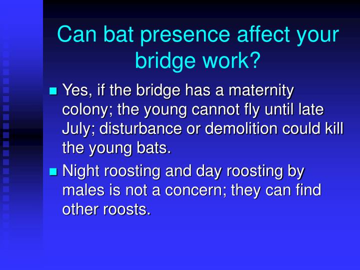 Can bat presence affect your bridge work?
