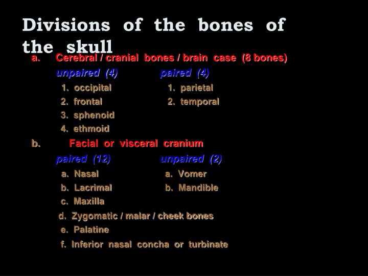 Divisions  of  the  bones  of  the  skull