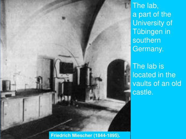 The lab,