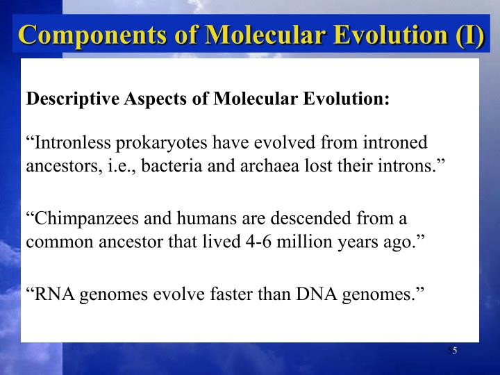 Components of Molecular Evolution (I)