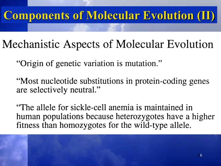 Components of Molecular Evolution (II)