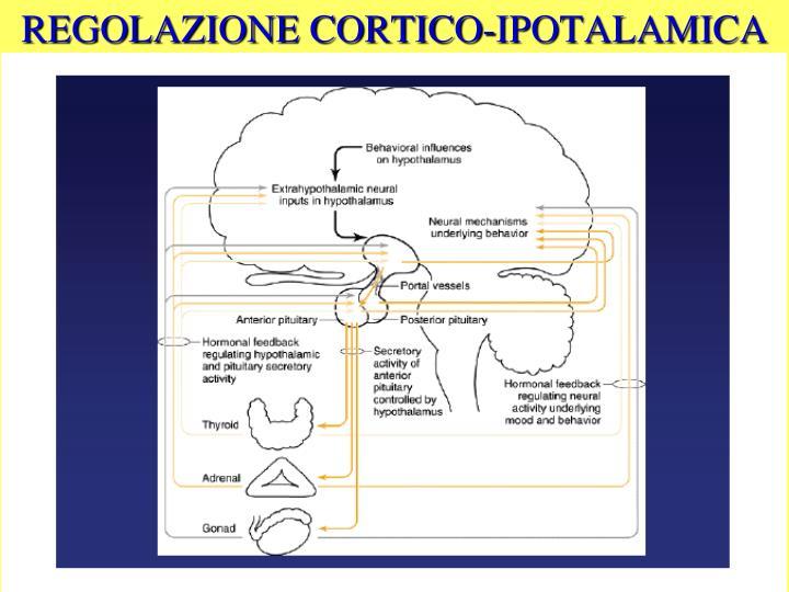 REGOLAZIONE CORTICO-IPOTALAMICA