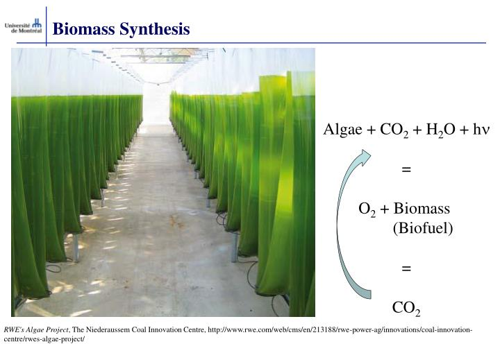 Biomass Synthesis