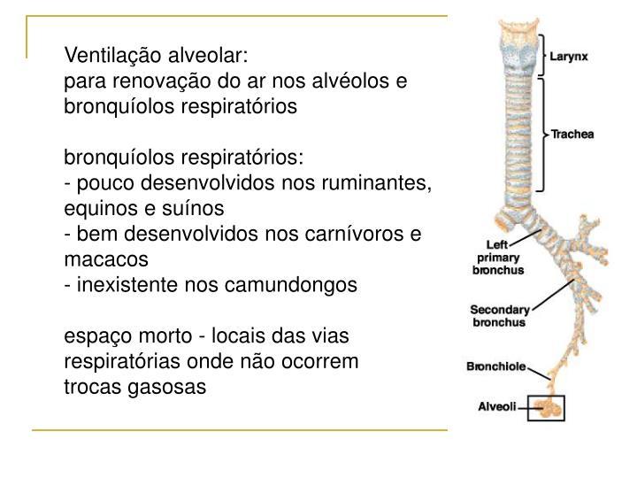 Ventilação alveolar: