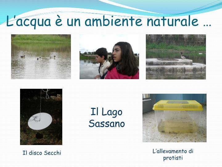 L'acqua è un ambiente naturale …