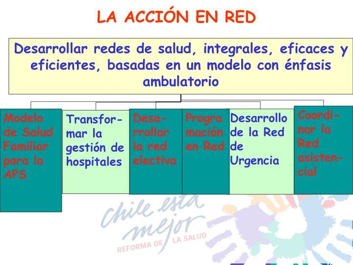 LA ACCIÓN EN RED
