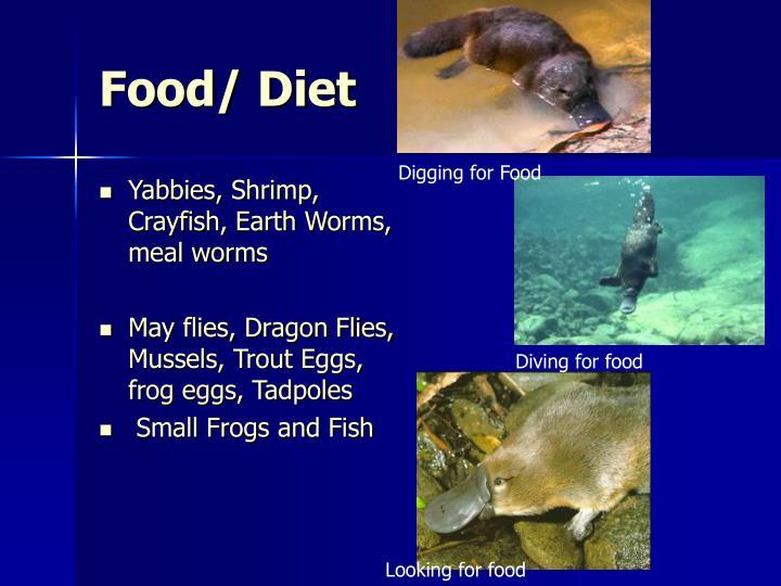 Food/ Diet