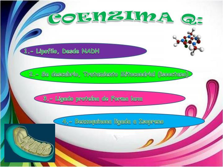 COENZIMA Q: