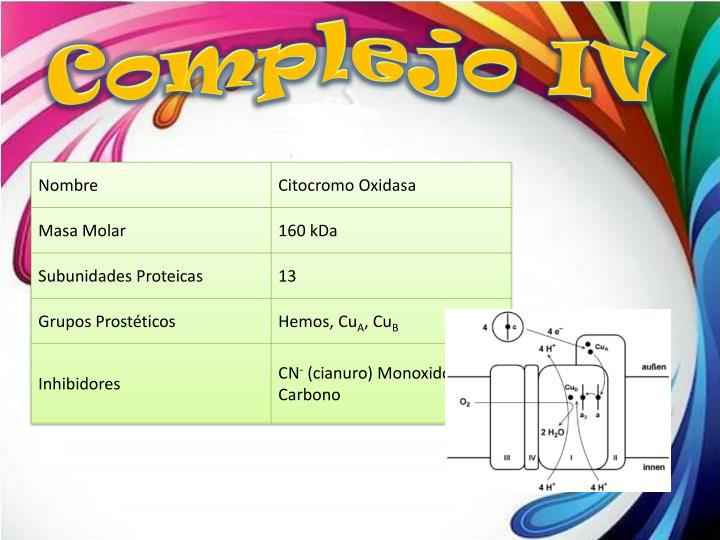 Complejo IV