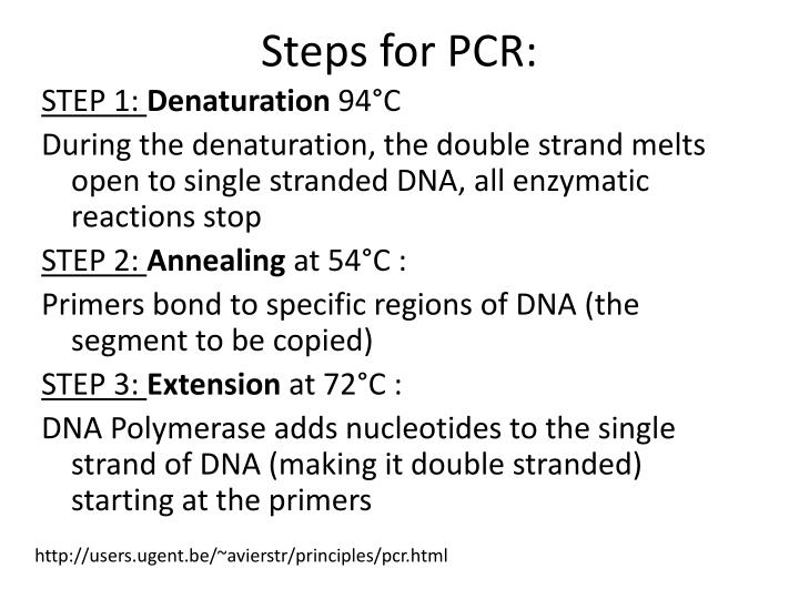 Steps for PCR: