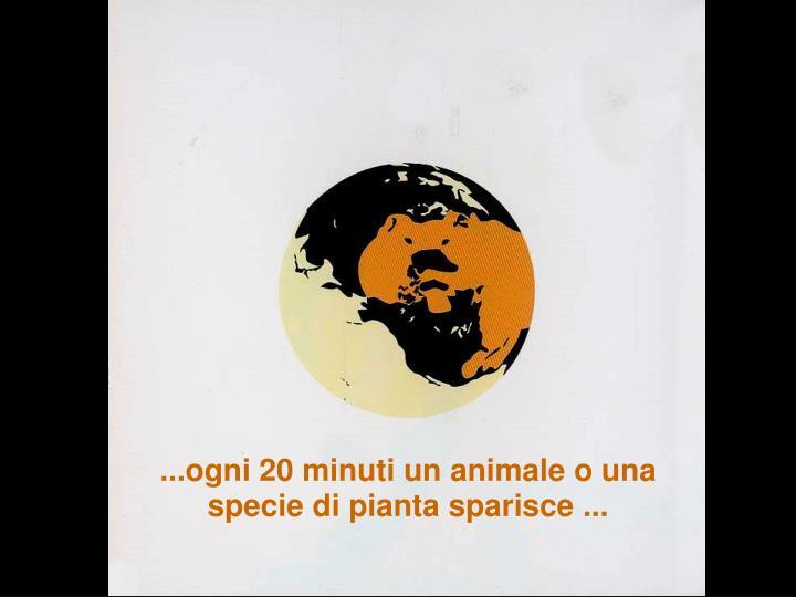 ...ogni 20 minuti un animale o una specie di pianta sparisce ...