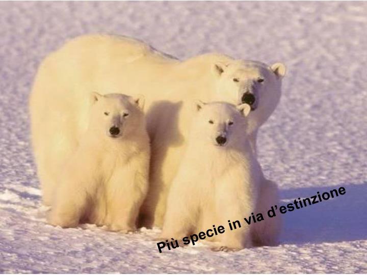 Più specie in via d'estinzione