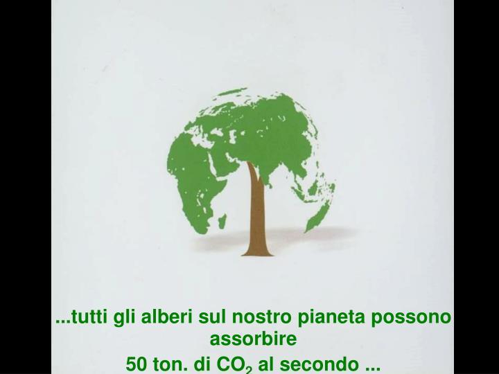 ...tutti gli alberi sul nostro pianeta possono assorbire