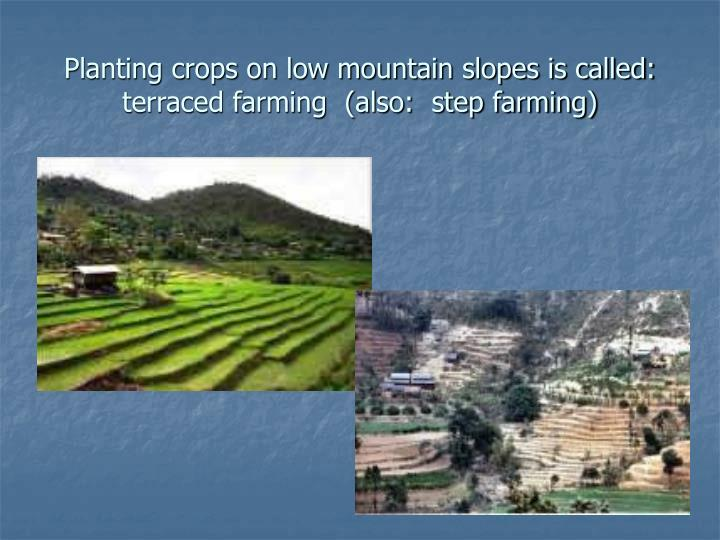 Planting crops on low mountain slopes is called:  terraced farming  (also:  step farming)
