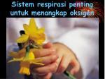 sistem respirasi penting untuk menangkap oksigen