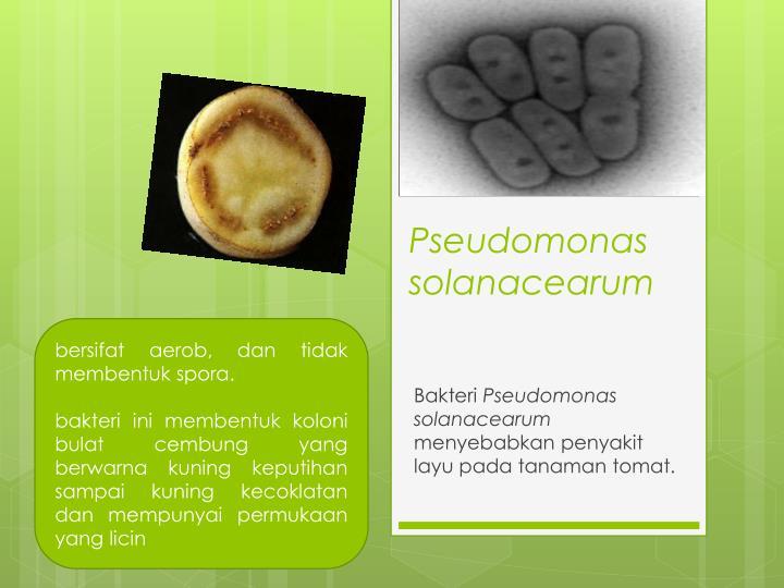 Pseudomonas solanacearum