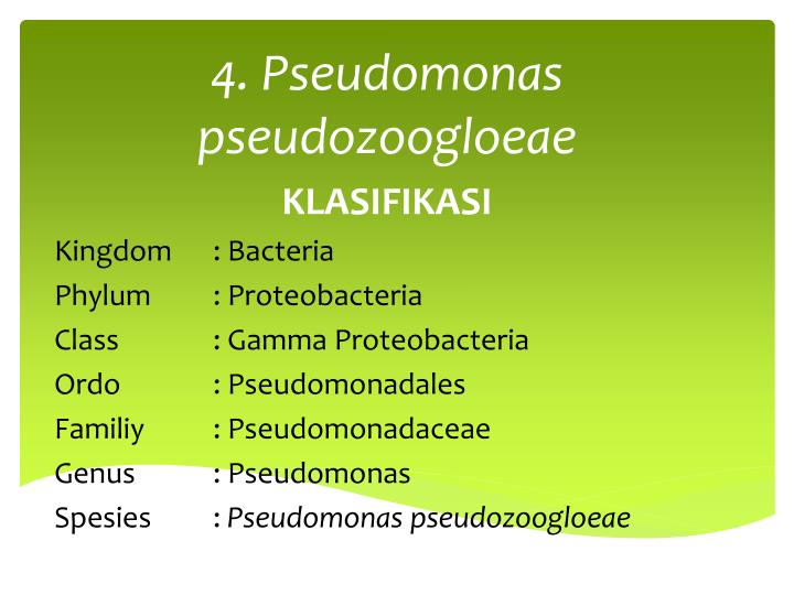 4. Pseudomonas pseudozoogloeae