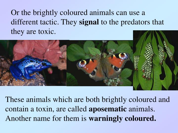 Or the brightly coloured animals can use a different tactic. They
