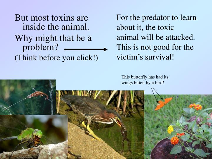 For the predator to learn about it, the toxic animal will be attacked.