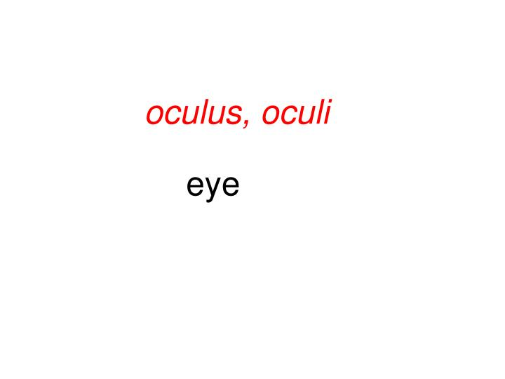 oculus, oculi