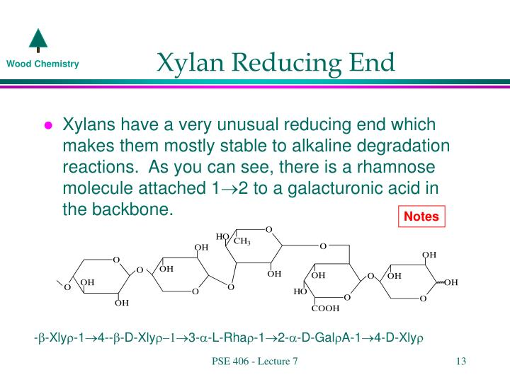 Xylan Reducing End