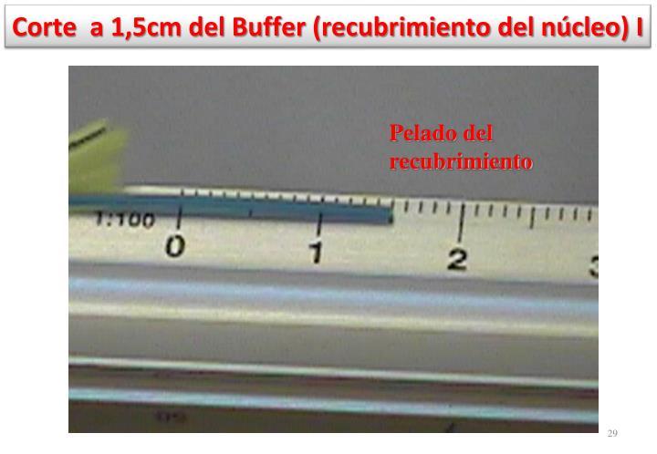 Corte  a 1,5cm del Buffer (recubrimiento del núcleo) I