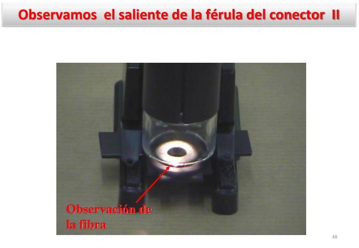 Observamos  el saliente de la férula del conector  II